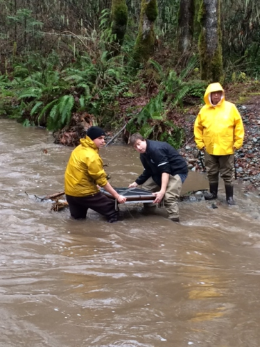 January - 40,000 Coho salmon & chum fry release into Tseycum Creek with Tseycum First Nation & Goldstream Park.